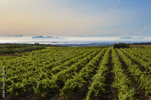 Fototapeta This is the view of the Eolie islands, with the vineyards in the foreground, Marsala (TP), Sicily obraz