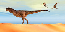 Carnotaurus Sastrei Dinosaur - Pteranodon Flying Reptiles Follow A Carnotaurus Theropod Dinosaur On The Hunt For His Next Prey During The Cretaceous Period.
