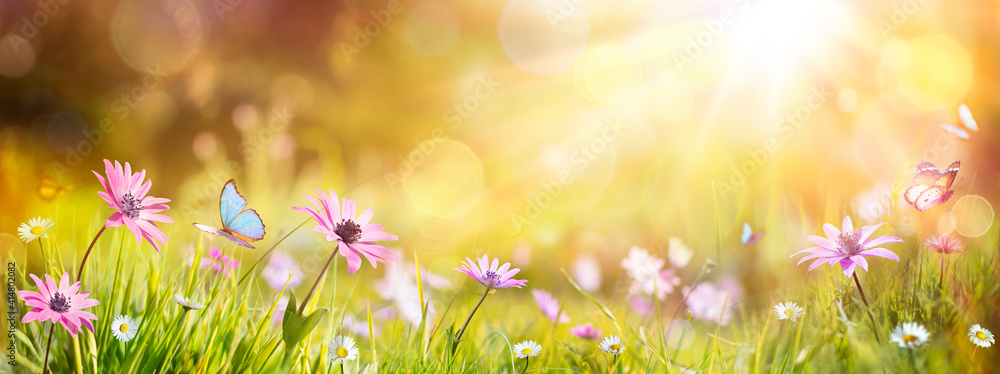 Fototapeta Abstract Defocused Spring - Purple Daisies And Butterfly On Grass In Sunny Field