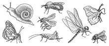 Vector Drawing Set Of Insects