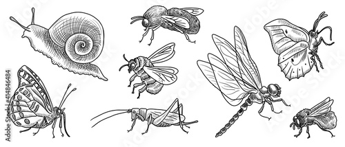 Fotografia vector drawing set of insects
