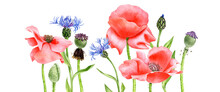 Watercolor Drawing Red Poppy Flowers