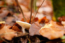 Selective Focus Shot Of Mushroom With Dried Autumn Leaves On Forest Ground