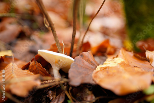 Fototapeta Selective focus shot of mushroom with dried autumn leaves on forest ground obraz
