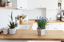 Blue Muscari Flower On White Modern Kitchen Scandinavian Style.