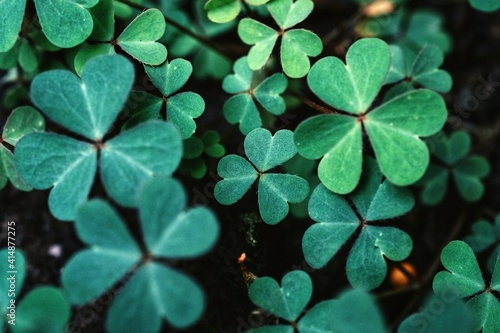 Fotografia Green background with three-leaved shamrocks
