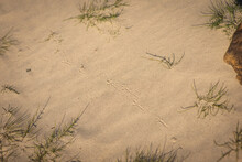 Background, Bird Tracks In The Sand, Selective Focus