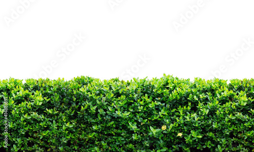 Canvas Green plants wall on a white background.