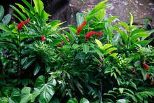 Verschiedene Tropenpflanzen Mit Blüten An Steinmauer