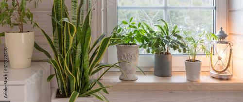 Fotografija Group of houseplant on white wooden windowsill in a Scandinavian-style room