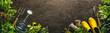 Gardening tools and seedlings on soil