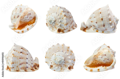 Seashell in different angles isolated on white Wallpaper Mural