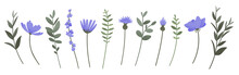 Flower And Branch Collection. Set Of Purple Flowers, Anemones, Daisies, Lavender And Cornflowers Isolated On Wihite Background. Vector Illustration.