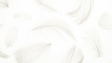 Feather Air Pattern. Multicoloured Pastel Angel Feather Closeup Texture On White Background In Macro Photography, Soft Focus. Concept Of Sensitivity Responsiveness To Nature.