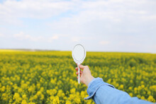 A Female Hand With A Miniature Retro Mirror In Field Of Yellow Wildflowers Is Reflected. Creative Summer Bright Concept.