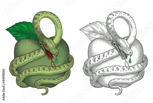 Green Apple and Snake Vector #1034 Wallpaper Mural