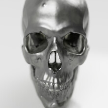 Human Skull Head Of A Man, Anatomical Model In Photo Studio