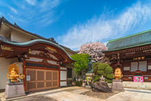 Cherry Blossoms In The Buddhist Togakuji Temple Adorned With Golden Statues Of Buddha Dainichi And Amida In Front Of A Traditional Gabled Karahafu Door.