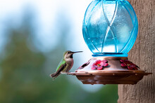 Close Up Of Very Small Cute Green Hummingbird Perched On Feeder With Blue Glass Orb.
