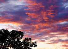 View Of Summer Sunset Sky And Tree Branch Silhouette