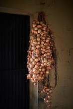 Bunch Of Raw Yellow Onion Bulbs With Dry Husk Hanging On Rough Wall In Old Building