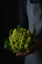 Crop Cook Hands On Apron Holding Bright Juicy Fractal Romanesco Cauliflower With Green Leaves On Dark Background