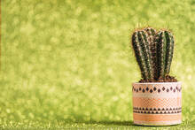 Fresh Spiky Cactus Growing In Flowerpot Placed On Glittering Green Background In Studio