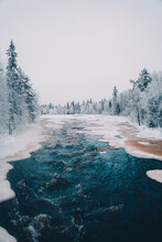 Scenic View Of Frozen River Surrounded By Tall Coniferous Trees Growing In Snowy Forest In Winter