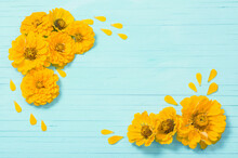 Yellow Zinnia Flowers On Blue Wooden Background