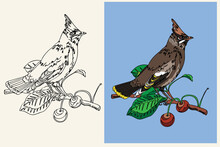 Vector Coloring Book With A Forest Bird Cedar Pipit Sitting On A Branch