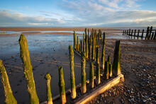 Rotting Upright Wooden Posts Of Old Sea Defences On Winchelsea Beach, Winchelsea, East Sussex