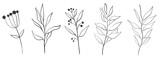 Botanical wall art vector set  boho Foliage line art drawing with abstract shape