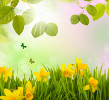 Fresh Daffodil Spring Background With Butterflys And Green Meadow In Landscape.