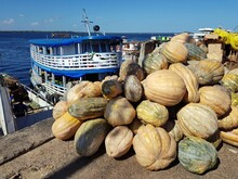 Pumpkin Delivery From The Interior Of Amazonia In The Port Of Manaus, Amazon - Brazil