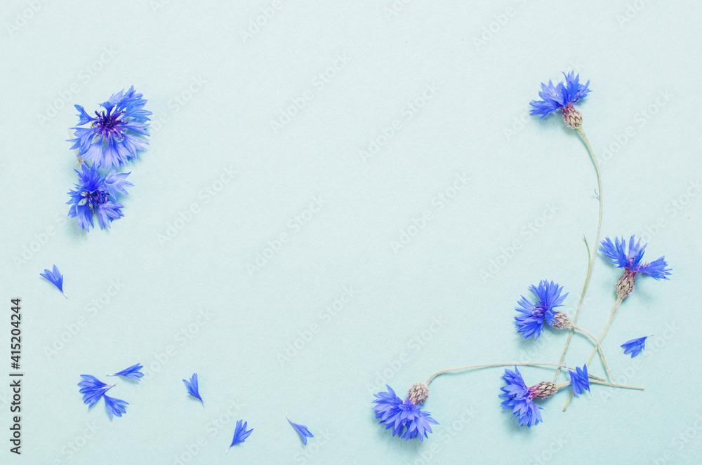 Fototapeta blue cornflowers on green paper background