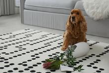 Brown Cocker Spaniel Dog Sitting Near Broken Vase With Flowers In Living Room