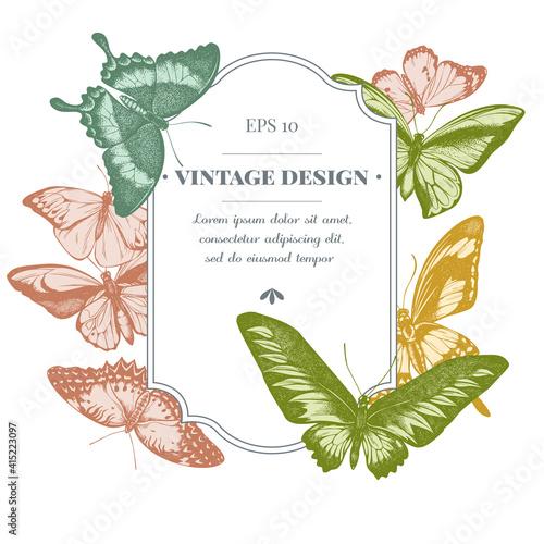 Fototapeta Badge design with pastel great orange-tip, emerald swallowtail, jungle queens, p