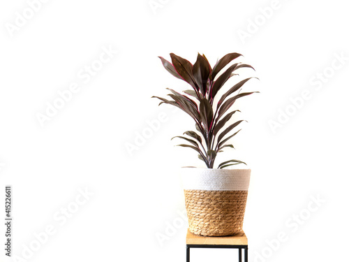 Tableau sur Toile Home Plant with green and purple leafs