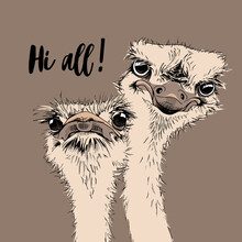 Portrait Of A Two Funny Ostriches Friends.  Hi All - Lettering Quote. Humor Card, T-shirt Composition, Hand Drawn Style Print. Vector Illustration.