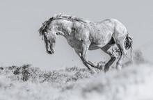 Widl Horses