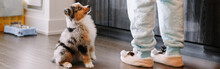 Pet Owner Training Puppy Dog To Obey. Cute Small Dog Pet Sitting On Floor Looking Up On Its Owner Waiting For Treat Food. Home Life With Domestic Animals. Well Behaved Animal. Web Banner Header.