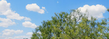 Bright And Sunny Texas Summer Sky With Tree.