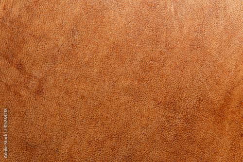 Obraz na plátně leather grunge background: an old piece of tough camel skin, with scuffs, spots,