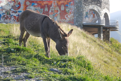 Photo donkey donkey in georgia