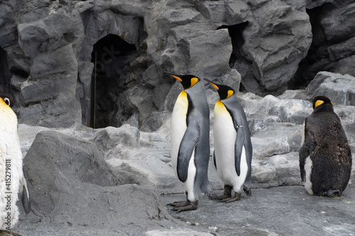 Canvas king penguin colony