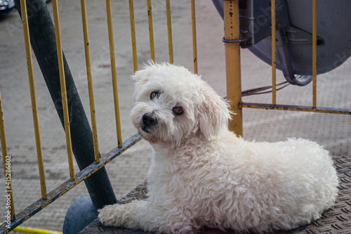 Fotografie, Obraz dog on the porch