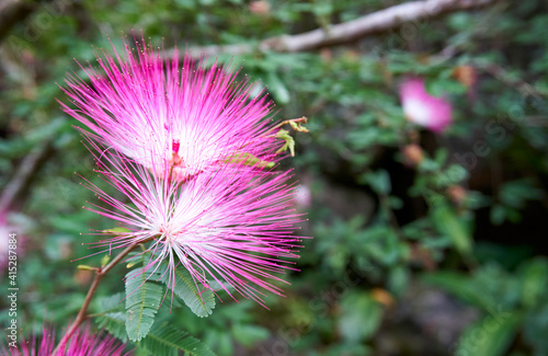 Fototapeta Flor em meio a floresta da Praia Grande RS Brasil