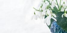 White Snowdrops Galanthus Nivalis In A Vase Close-up On A White Background. A Delicate Spring Bouquet. The Concept Of The First Flowers, Early Spring, Romance, Feelings. Horizontal Layout, Copy Space