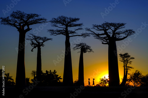 Foto Avenue of the Baobabs trees at sunset, Madagascar