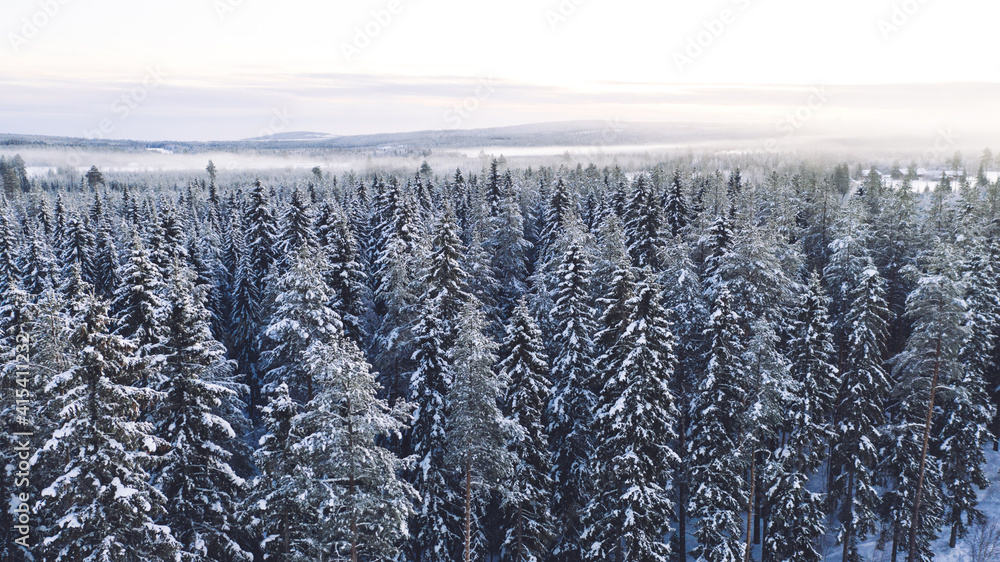 Fototapeta Aerial view from drone of frozen snowy pines of high trees in Lapland national park environment, bird's eye view of famous natural landmark in Riisitunturi on winter season at sunset time.